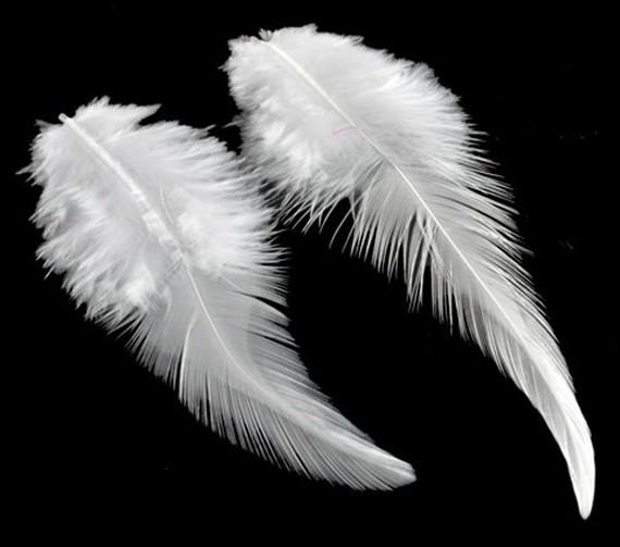 les plumes feathers signes et messages angeliques. Black Bedroom Furniture Sets. Home Design Ideas